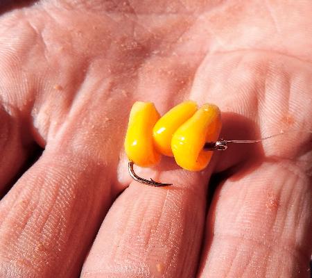 Как насадить кукурузу на крючок