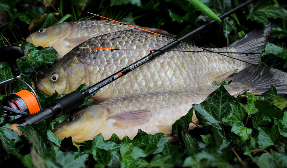Ловля карася на флэт фидер: особенности монтажа при ловле