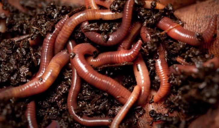 Мотыль, опарыш и червь: как добавлять в прикормку